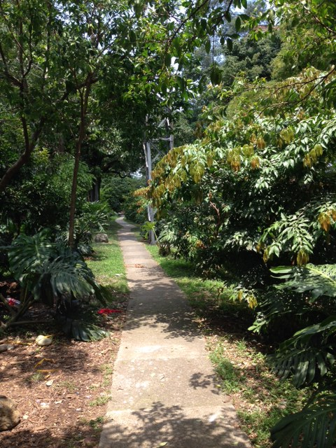 Talk about fertile Medellin!  This lovely path along a canal (for me) leads to the local Exito - the local Walmart that sells produce, clothes and even tires