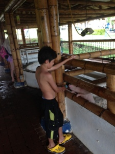 I had a chance to go to a teachers' celebration day at a local park/farm.  Here's a kid feeding the pigs - no worries, I did too along with feeding the goats and sheep and....